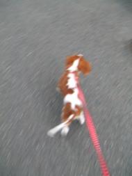 走る走る~