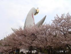 太陽の塔のバックスタイルも桜がキレーでした