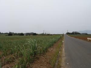 徳之島 畑が続きます