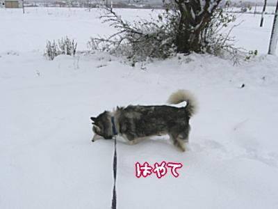 20091101yuki3.jpg