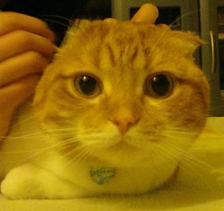 耳ガリガリ)