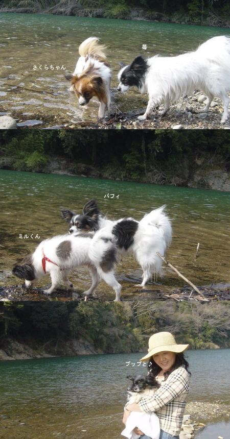 きれいな川♪