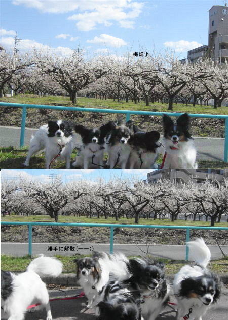 梅畑を背に♪