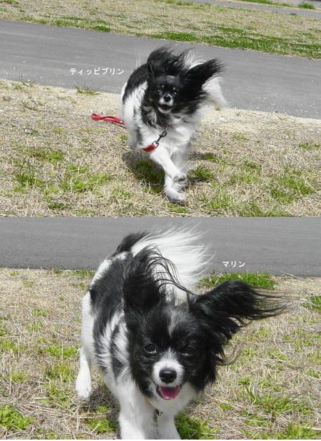 風~強いです!