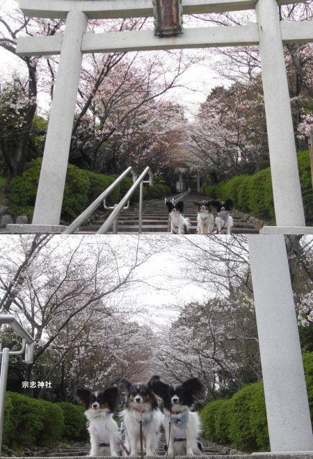 20060406-7b.jpg