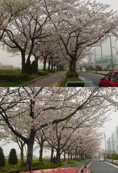 菅田散歩道