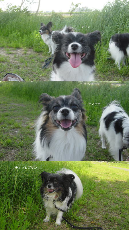 気持ちいい~散歩!