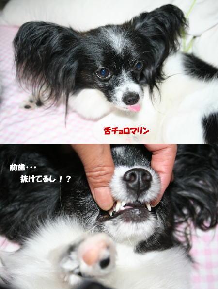 歯抜けのマリン(^_^;)