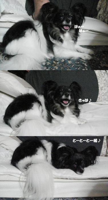 プップね…雷恐いの^_^;
