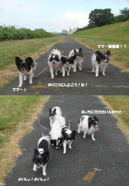 散歩だ~!