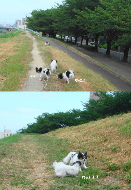 散歩!散歩♪