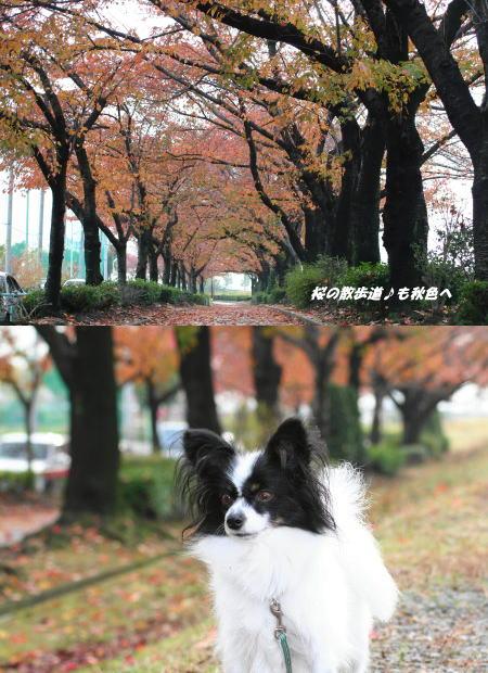 秋色の風景&苺っち