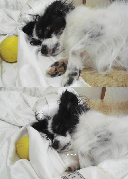 苺も!寝んねする~!