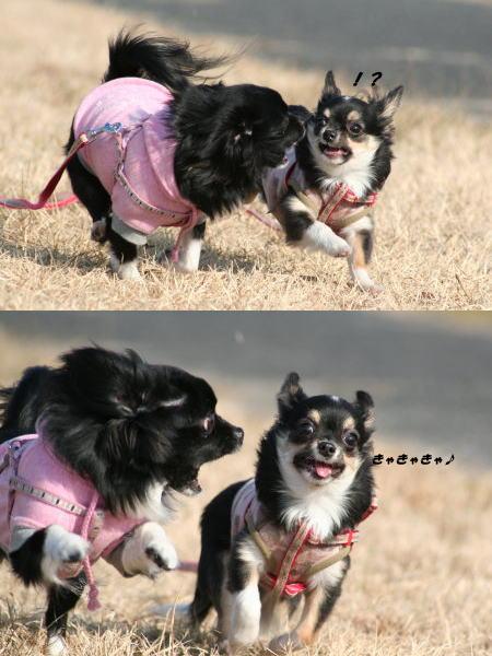 ぴぃ&小町ちゃん