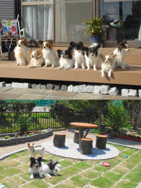 素敵な庭~♪