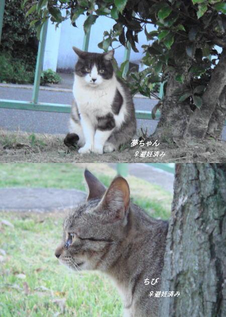 ひめちゃん&ちび