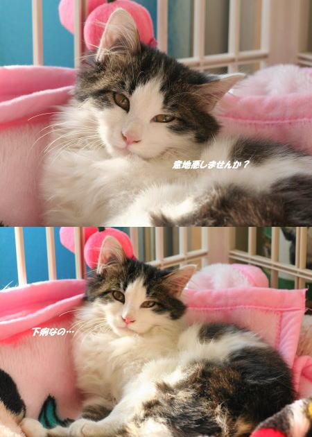 きれいな子猫…だ♪