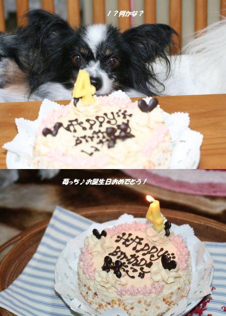 イッチ♪お誕生日おめでとう!