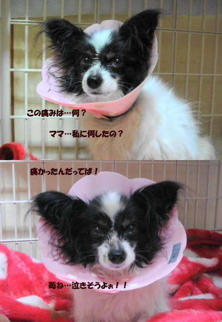 すがるような眼で見る苺っち(^_^;)