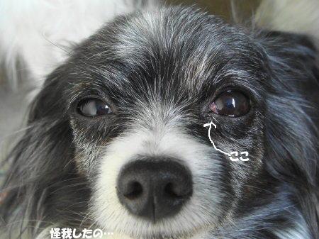 左目負傷(^_^;)
