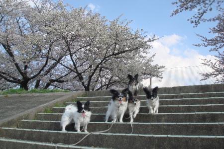 お花見しながら散歩です