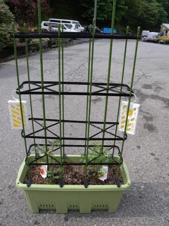2011年6月3日大プランタートマト植え付け