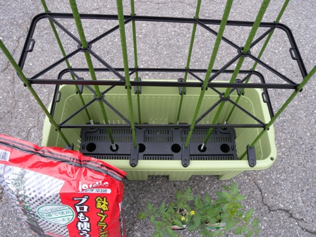 2011年6月3日大プランタートマト用アップ
