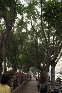 台湾の街路樹