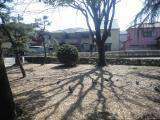 水月公園の鳩