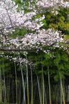 spring10_001.jpg