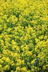 spring10_004.jpg