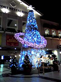 marinpia tree1