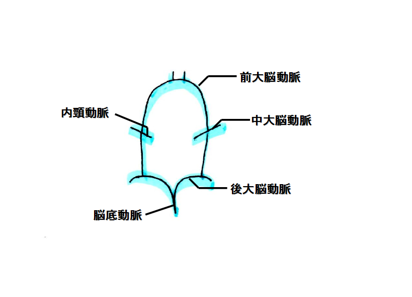 ウイリス動脈輪 略図