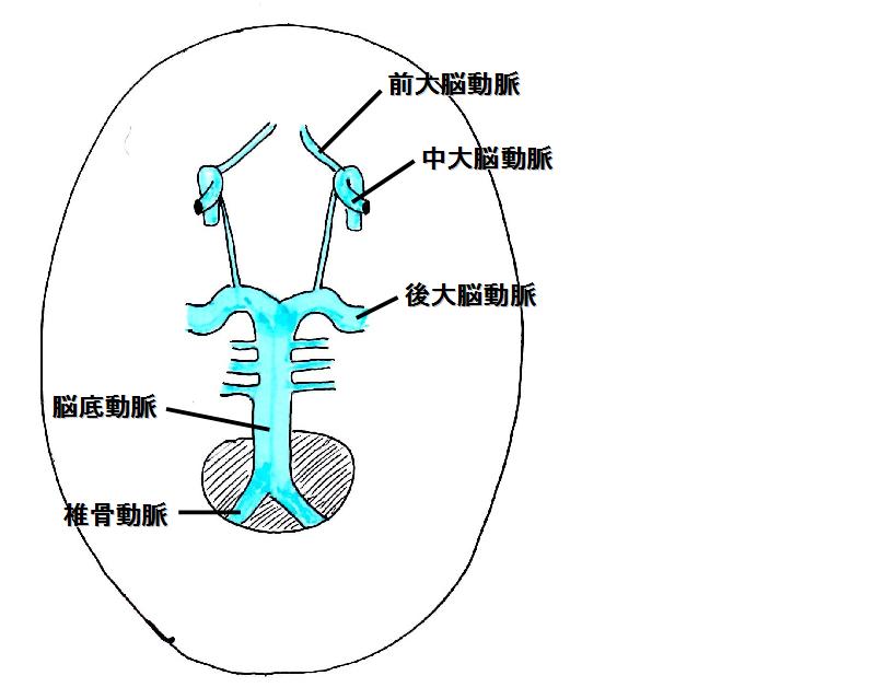 ウイリス動脈輪
