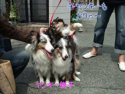 3姉妹 006