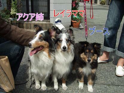 3姉妹 004