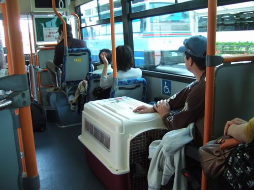 318 bus