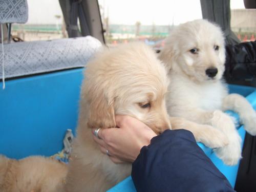 324 puppy