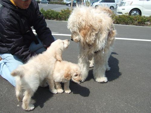 330 puppy
