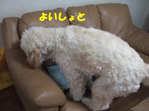 DSCF7096.jpg