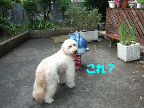 DSCF7315.jpg