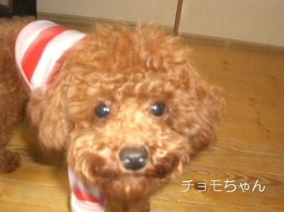 1ちょもちゃんCIMG1604