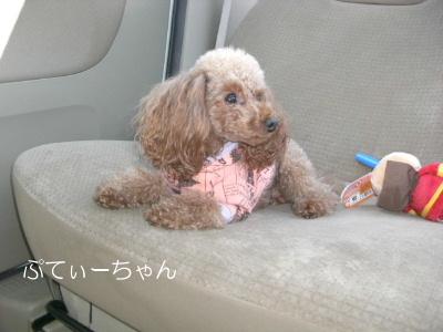 2ぷーちゃんCIMG1037