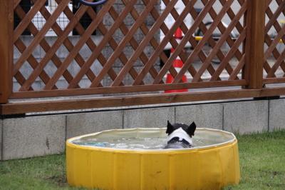 梅雨の合間にプール開き!!