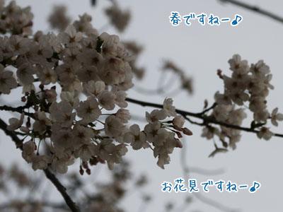 041201_20110412213113.jpg