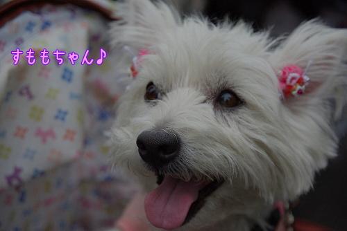 090503amakusa021.jpg
