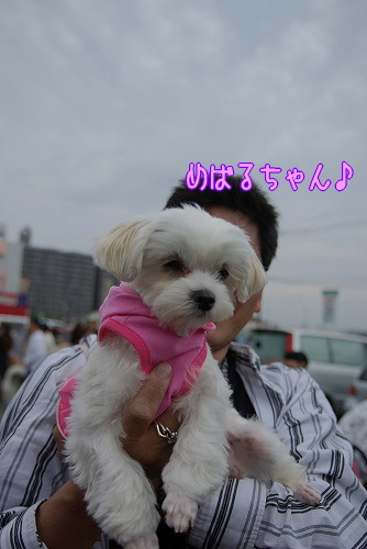 090503amakusa027.jpg