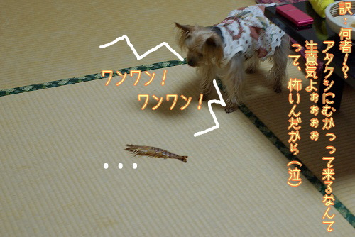 090503amakusa113.jpg
