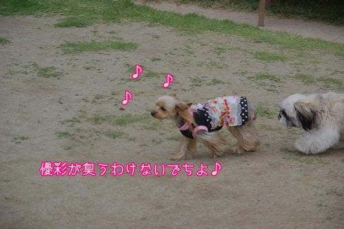 09520hiyokomama018.jpg