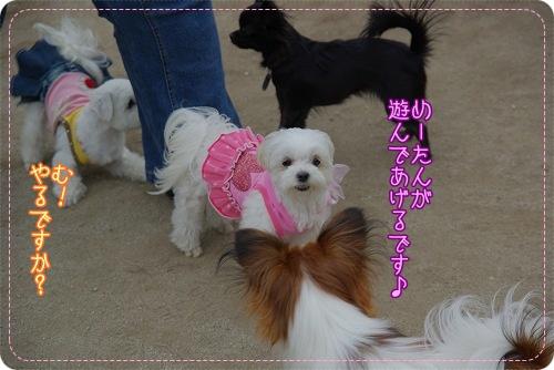 09520hiyokomama032.jpg